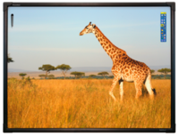 Интерактивная доска 78 ActivBoard Touch 6 касаний, ПО ActivInspire